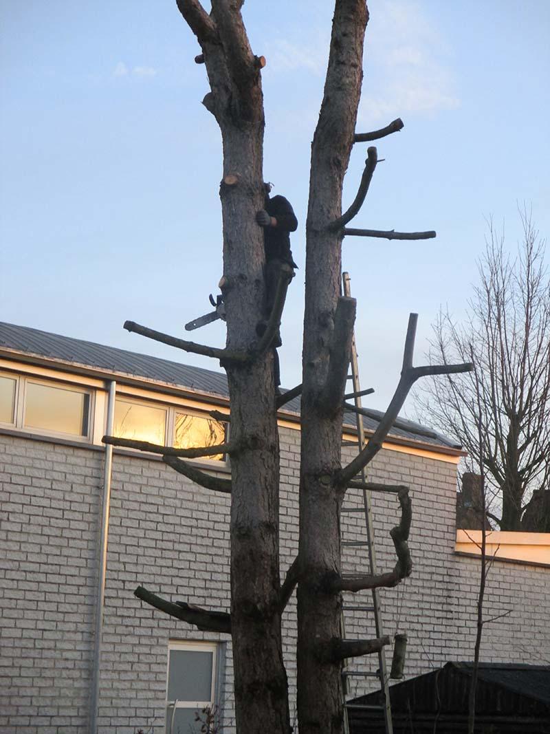 Bomen vellen